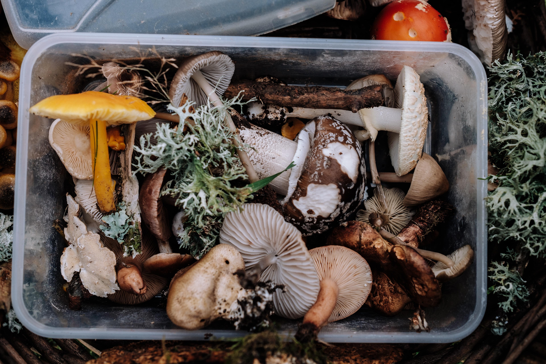 dlaczego warto jesc grzyby